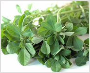 fenugreek extracts