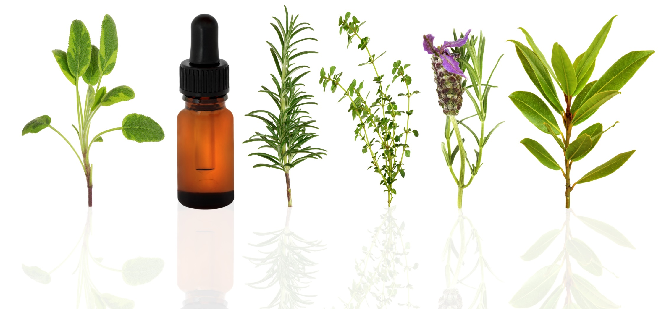 Indo World-Herbs Suppliers, herbal oils Exporters, Botanical herbs